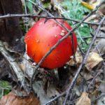 Pilze sammeln am besten im Herbst