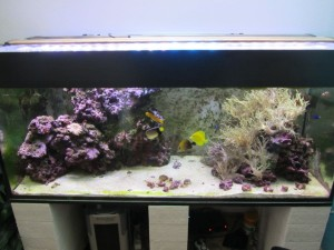 Aquarium unter LED
