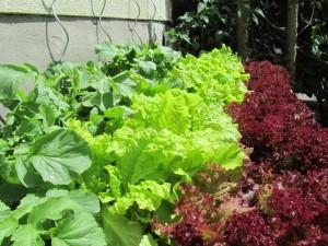 VegTrug Salat