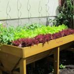 Das VegTrug Hochbeet im Test mit Bewertung für Balkon, Terasse und Garten