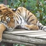 Der Zoo von Amneville, Eintrittspreise, Test und persönliche Besucher Bewertung