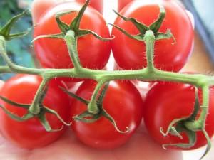 Tomaten gesund und gegen Krebs