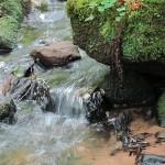 50mg Nitrat Grenzwert für deutsches Trinkwasser, warum Leitungswasser immer schlechter wird!