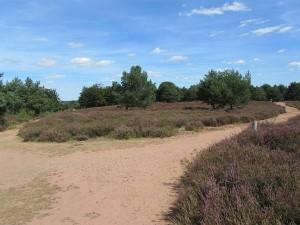 Die Heide ist gut mit Wegen durchzogen