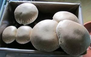 Champignons Pilze wieder aufwärmen schädlich und ungesund