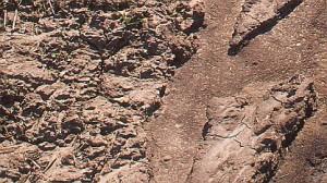 Zerstörte und verseuchte Böden durch Sojabohnen und Ölpalmen Monokulturen