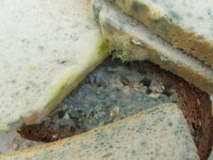 Extrem schimmliges Brot gegessen Grund zur Panik