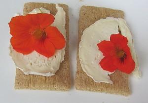 Käse ohne Natamycin E235