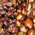 Was ist der Unterschied zwischen Maronen und Kastanien und welche schmecken besser?
