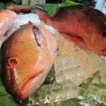 Die Fischvergiftung – Ausführliche Informationen zu Symptomen, Ursachen, Verlauf, deren Dauer sowie mögliche medizinische Diagnose- und Behandlungsarten