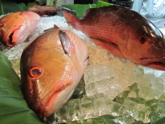 Eine Fischvergiftung durch Red Snapper oder Zackenbarsch ist eher wahrscheinlich als durch Lachs und Hering