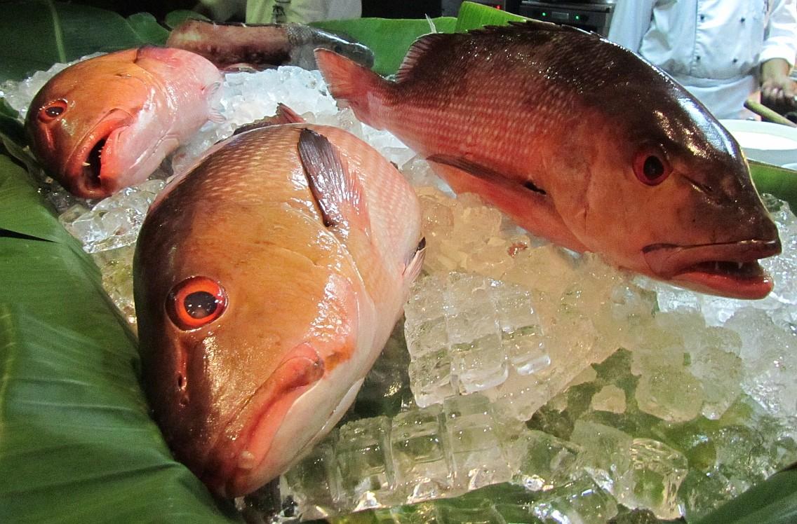 Die Fischvergiftung - Ausführliche Informationen zu Symptomen, Ursachen, Verlauf, deren Dauer sowie mögliche medizinische Diagnose- und Behandlungsarten
