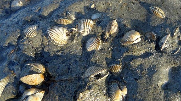 Bild mit Muscheln zum Thema Fischvergiftung