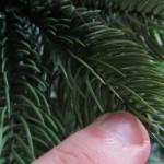 Sind künstliche Plastik Weihnachtsbäume gesundheitsschädlich und mit Giften belastet?