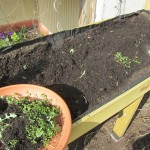 Das Gemüsehochbeet im Frühling, frisch Befüllen und Bepflanzen, welche einfach zu pflegenden Gemüsesorten nun ausgesät werden können