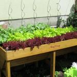 Gemüse das sich gut verträgt und Gemüse das sich nicht gut verträgt, warum man unbedingt auf die Pflanzennachbarschaft im Beet achten sollte?