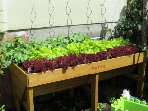 Welches Gemüse verträgt sich gut Beispiele