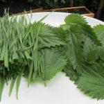 Mein grünes Brennnessel Smoothie Rezept mit rohen Brennnesselblättern, Honig, Reismilch und frischem Weizengras aus eigenem Anbau