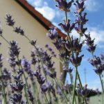 Wechseljahresbeschwerden und wie sie auf natürlicher und pflanzlicher Basis gelindert werden können