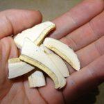 Dritte Woche vegane Rohkost, Gewichtsverlust gestoppt, deutlich bessere Haut, sieben neue Lebensmittel und ein Heil-Pilz