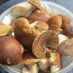 Kann man alle Pilze roh essen? – Warum wenige Ausnahmen wie Champignons roh gegessen werden können und andere Pilze im Rohzustand ungesunde, schädliche bis hin zu tödlichen Folgen haben können
