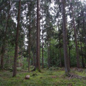 Wie alt werden Bäume und wie alt ist der älteste Baum der Welt?