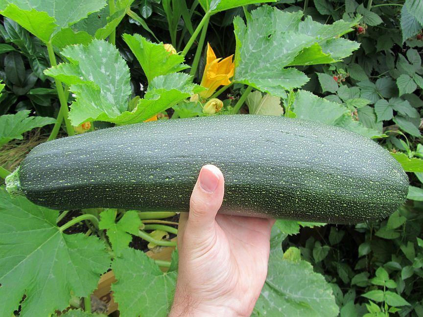 Erfolgsrezept für gute Erträge im Garten und auf dem Balkon