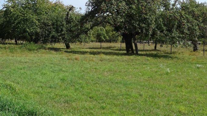 Was Ist Besser Für Meinen Rasen Mulchen Oder Mähen Alternativ
