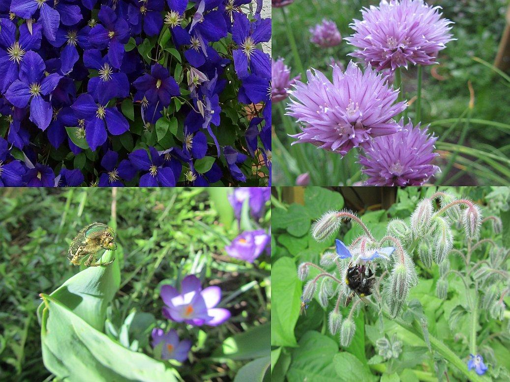 35 für Bienen, Hummeln, Schmetterlinge und andere Insekten freundliche Blumen, Kräuter sowie Obst und Gemüsepflanzen die gegen das Bienen- und Insektensterben helfen