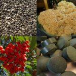 Was sind Superfoods? – Nahrungsmittel mit hoher Mikronährstoffdichte und/oder positiven funktionellen Auswirkungen auf den Körper z.B. auf die Verdauung