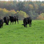 Tierwohl, Qualität und Geschmack von Heumilch und Heumilchkäse im Vergleich zu Weidemilch und Silomilch
