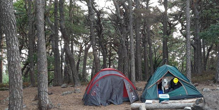 Schlafen und Zelten im Wald legal oder verboten? – Darf ich einfach ein Zelt irgendwo im Wald aufbauen und dort eine Nacht oder länger verbringen?